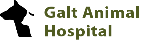 Galt Animal Hospital | Veterinarian Cambridge Ontario